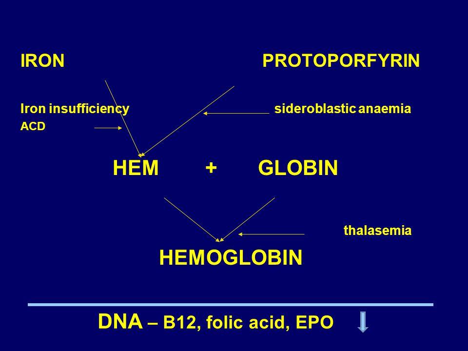 IRON PROTOPORFYRIN Iron insufficiency sideroblastic anaemia ACD HEM + GLOBIN thalasemia HEMOGLOBIN DNA – B12, folic acid, EPO