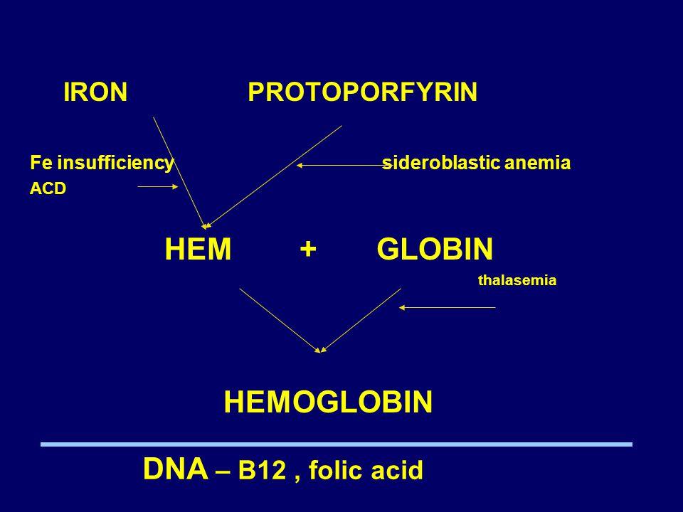 IRON PROTOPORFYRIN Fe insufficiency sideroblastic anemia ACD HEM + GLOBIN thalasemia HEMOGLOBIN DNA – B12, folic acid