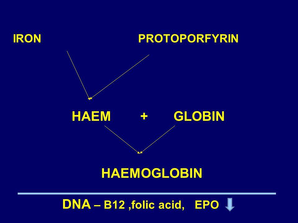 IRON PROTOPORFYRIN HAEM + GLOBIN HAEMOGLOBIN DNA – B12,folic acid, EPO