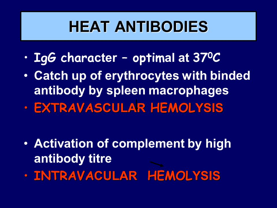 HEAT ANTIBODIES IgG chara cter – optim al at 37 0 C Catch up of erythrocytes with binded antibody by spleen macrophages EXTRAVAS CULAR HEMOL YSISEXTRAVAS CULAR HEMOL YSIS Activation of complement by high antibody titre INTRAVA CULAR HEMOL YSISINTRAVA CULAR HEMOL YSIS