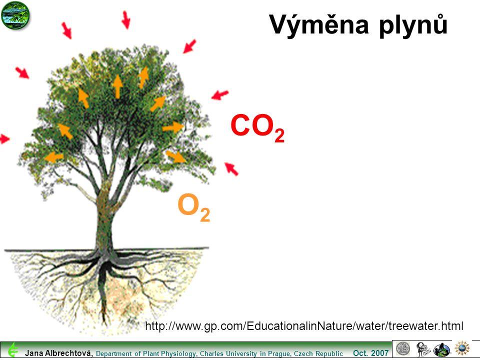 http://www.gp.com/EducationalinNature/water/treewater.html Výměna plynů CO 2 O2O2 Jana Albrechtová, Department of Plant Physiology, Charles University