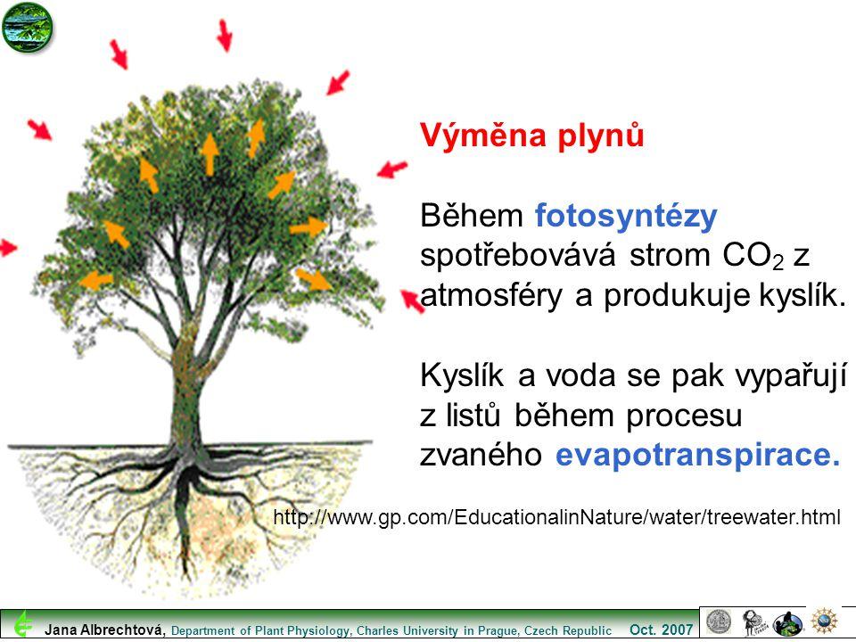 http://www.gp.com/EducationalinNature/water/treewater.html Výměna plynů Během fotosyntézy spotřebovává strom CO 2 z atmosféry a produkuje kyslík. Kysl