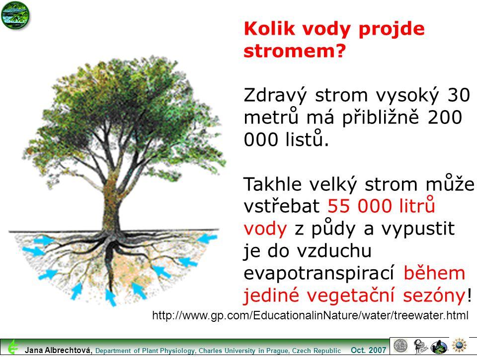 http://www.gp.com/EducationalinNature/water/treewater.html Kolik vody projde stromem? Zdravý strom vysoký 30 metrů má přibližně 200 000 listů. Takhle