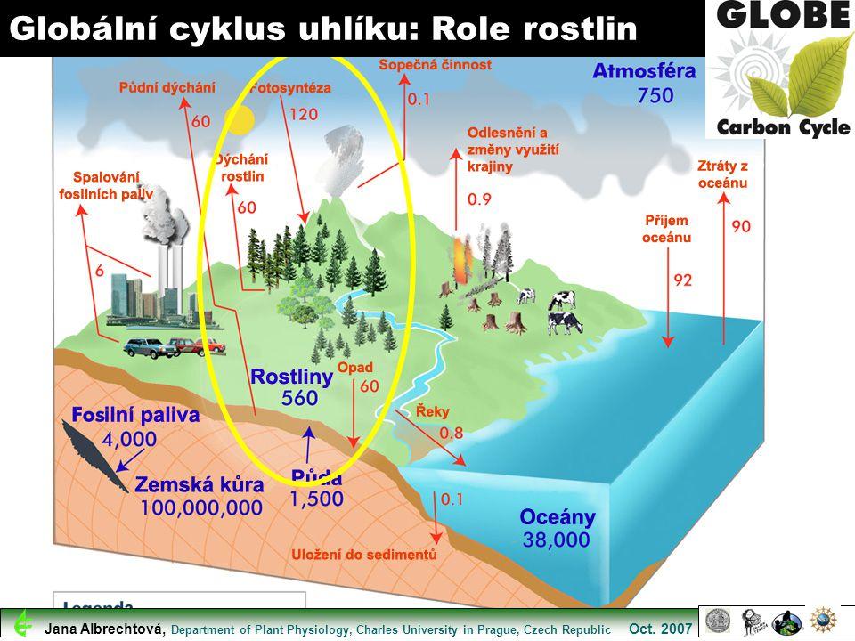 Globální cyklus uhlíku: Role rostlin Jana Albrechtová, Department of Plant Physiology, Charles University in Prague, Czech Republic Oct. 2007