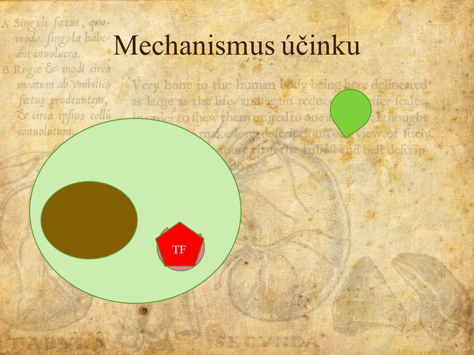 Mechanismus účinku TF