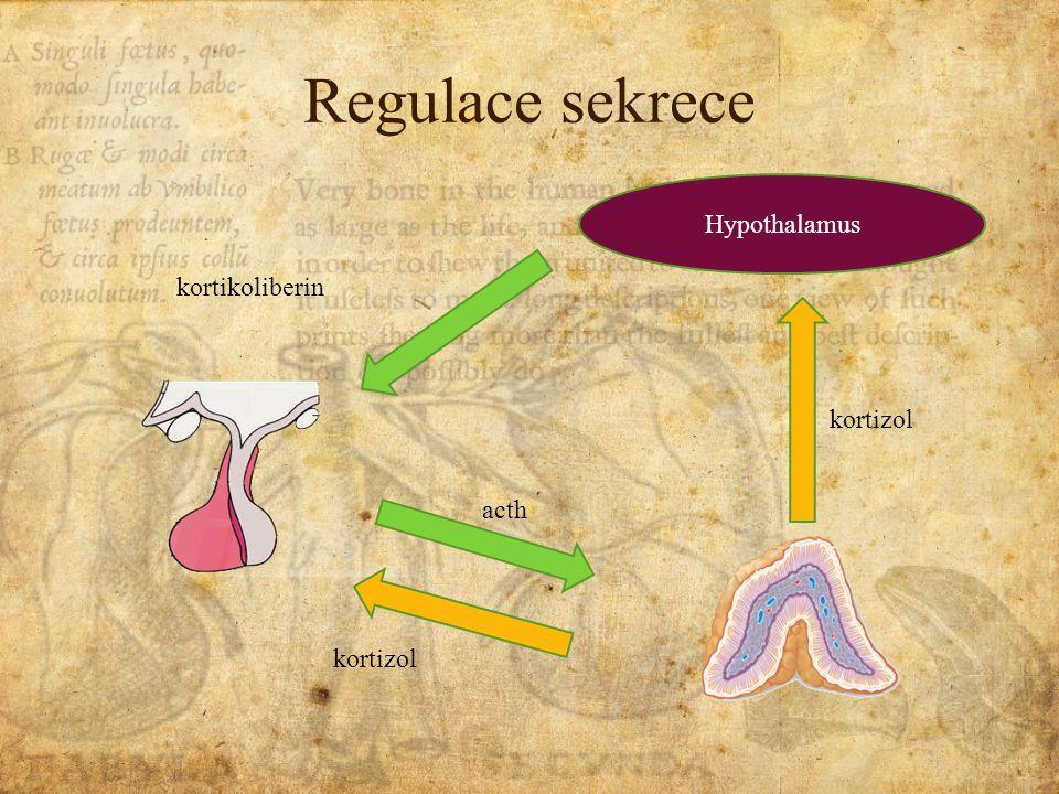 Regulace sekrece Hypothalamus kortikoliberin acth kortizol