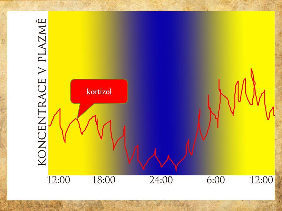 Cirkadiánní rytmus kortizol