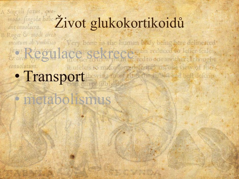 Život glukokortikoidů Regulace sekrece Transport metabolismus
