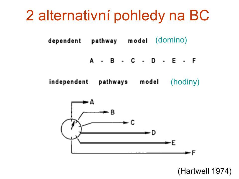 2 alternativní pohledy na BC (Hartwell 1974) (domino) (hodiny)