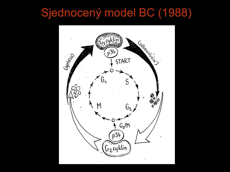 Sjednocený model BC (1988)