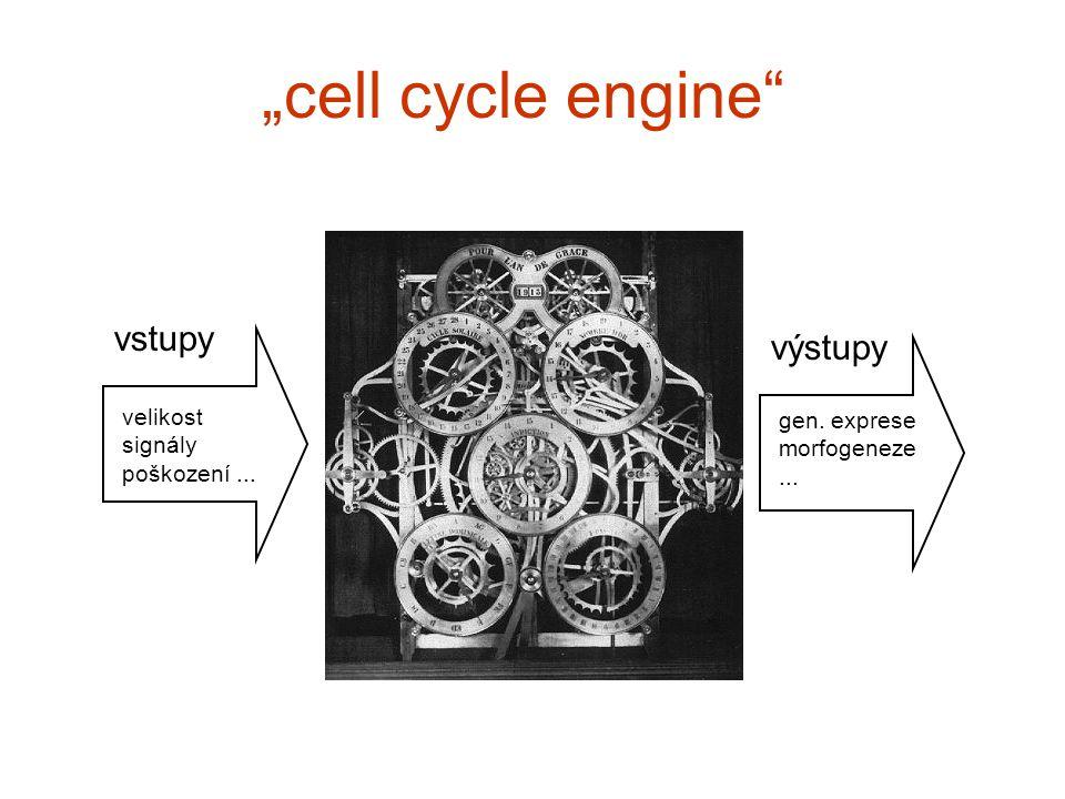 """""""cell cycle engine vstupy výstupy velikost signály poškození... gen. exprese morfogeneze..."""