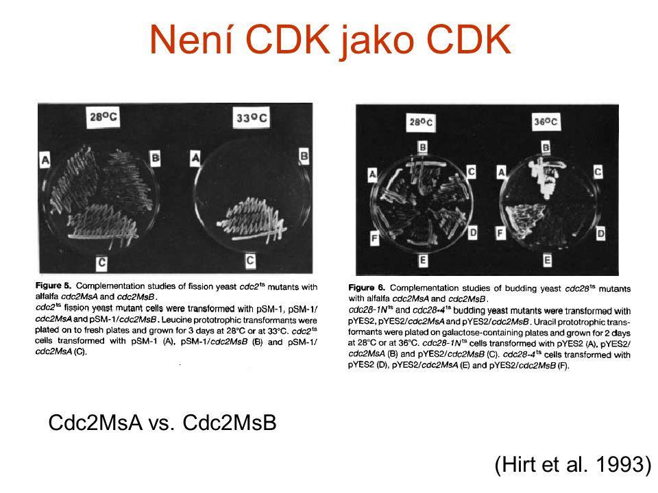Není CDK jako CDK Cdc2MsA vs. Cdc2MsB (Hirt et al. 1993)
