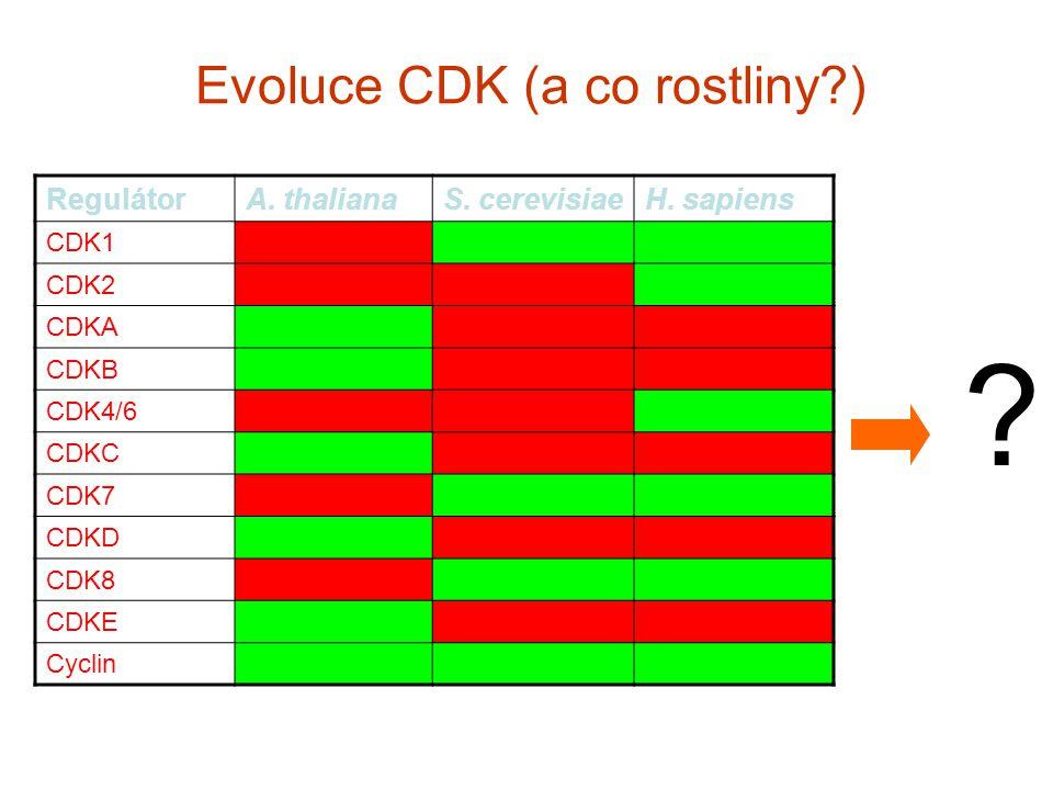 Evoluce CDK (a co rostliny ) RegulátorA. thalianaS.