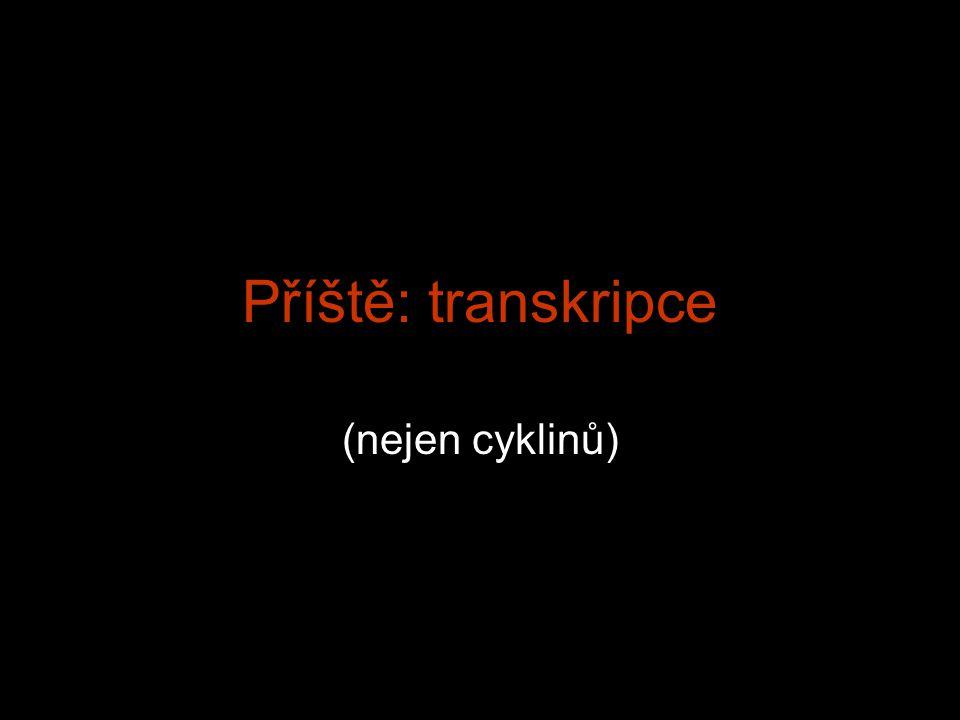 Příště: transkripce (nejen cyklinů)
