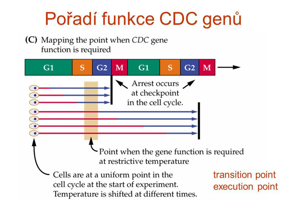 Pořadí funkce CDC genů transition point execution point