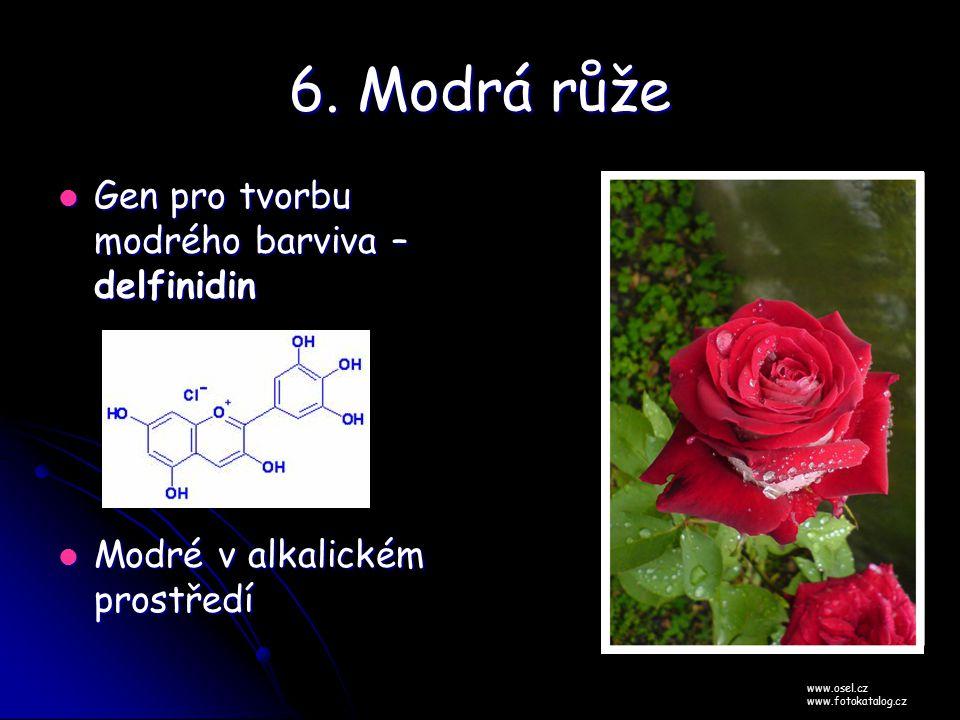 6. Modrá růže Gen pro tvorbu modrého barviva – delfinidin Gen pro tvorbu modrého barviva – delfinidin Modré v alkalickém prostředí Modré v alkalickém