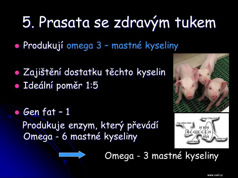 5. Prasata se zdravým tukem Produkují Produkují omega 3 – mastné kyseliny Zajištění dostatku těchto kyselin Zajištění dostatku těchto kyselin Ideální