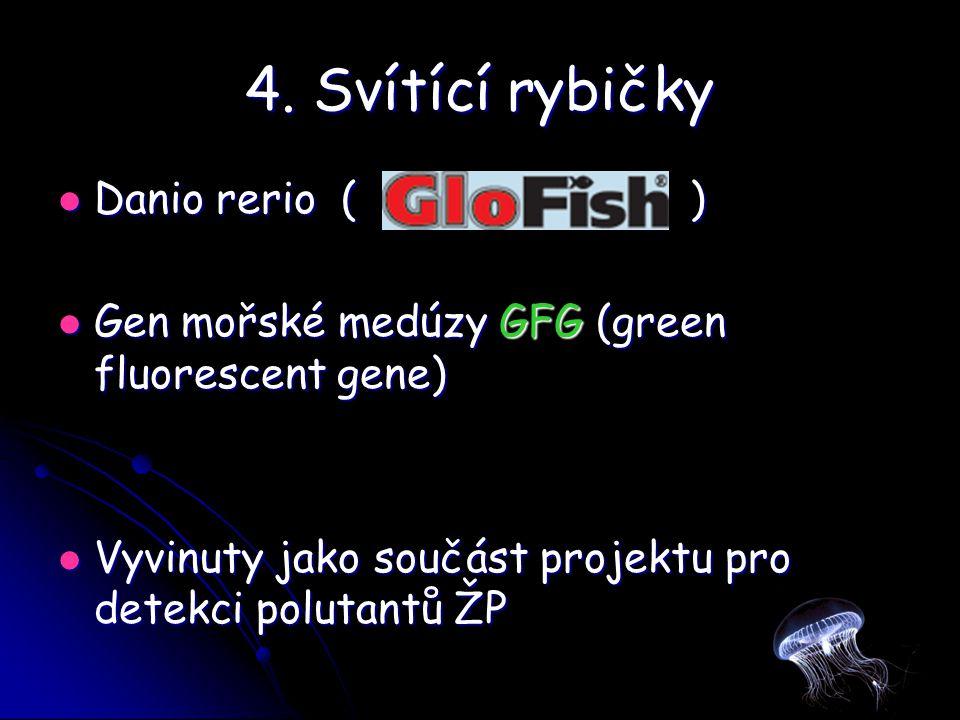 4. Svítící rybičky Danio rerio ( ) Danio rerio ( ) Gen mořské medúzy GFG (green fluorescent gene) Gen mořské medúzy GFG (green fluorescent gene) Vyvin