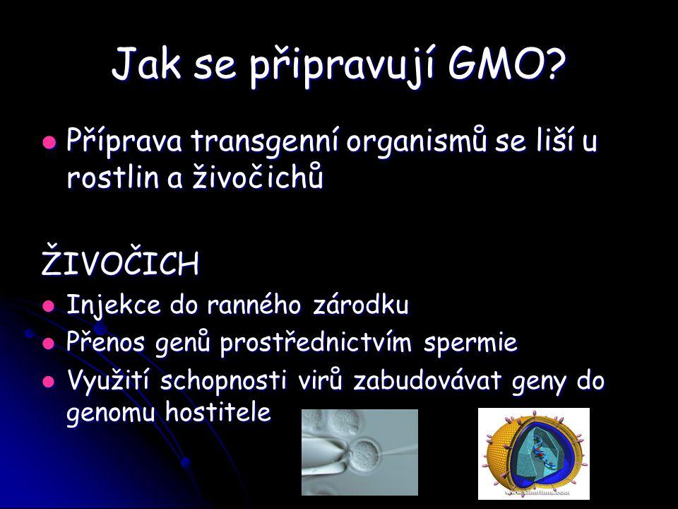 Jak se připravují GMO? Příprava transgenní organismů se liší u rostlin a živočichů Příprava transgenní organismů se liší u rostlin a živočichůŽIVOČICH