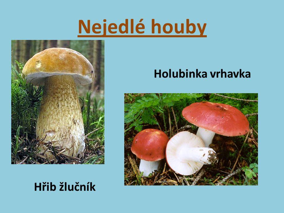 Nejedlé houby Hřib žlučník Holubinka vrhavka