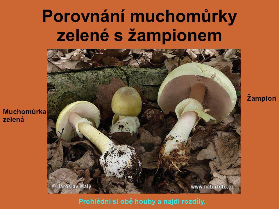 Porovnání muchomůrky zelené s žampionem Muchomůrka zelená Žampion Prohlédni si obě houby a najdi rozdíly.