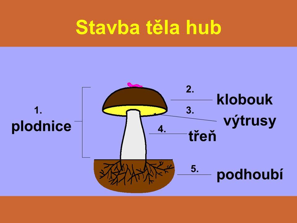 Stavba těla hub plodnice klobouk výtrusy třeň podhoubí 1. 2. 3. 4. 5.