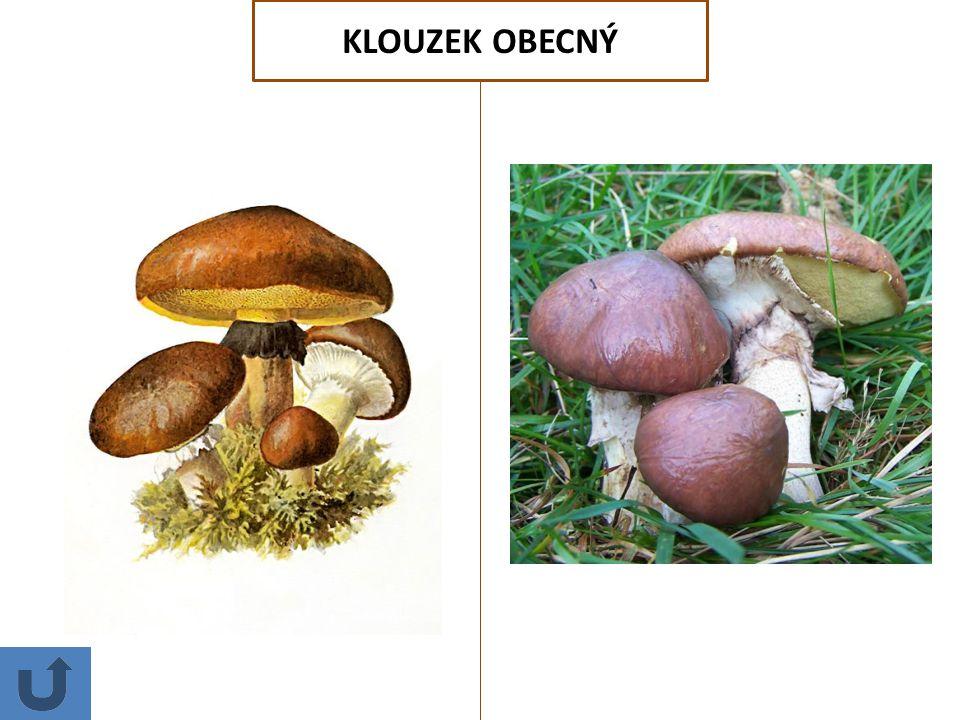 HŘIB KOVÁŘ