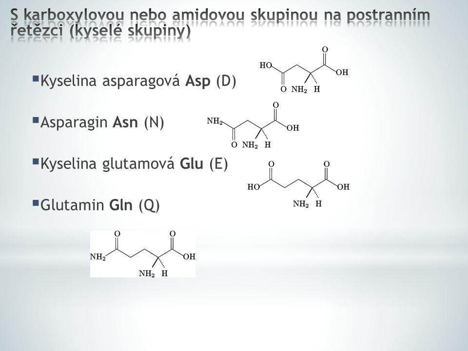  Kyselina asparagová Asp (D)  Asparagin Asn (N)  Kyselina glutamová Glu (E)  Glutamin Gln (Q)
