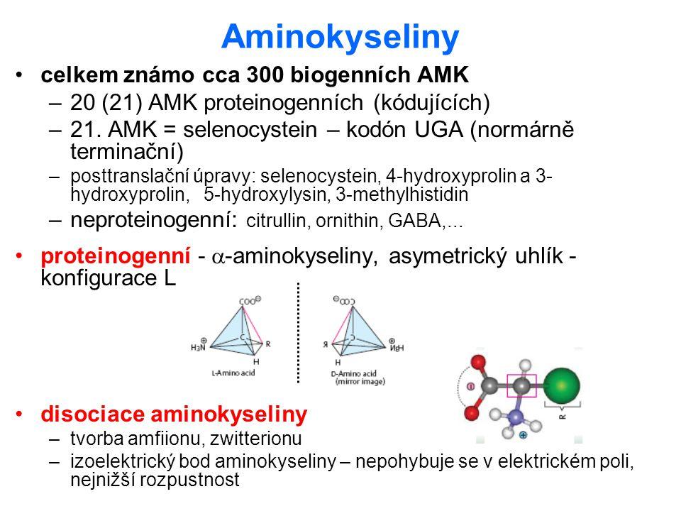 Aminokyseliny celkem známo cca 300 biogenních AMK –20 (21) AMK proteinogenních (kódujících) –21. AMK = selenocystein – kodón UGA (normárně terminační)