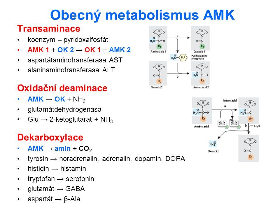 Obecný metabolismus AMK Transaminace koenzym – pyridoxalfosfát AMK 1 + OK 2 → OK 1 + AMK 2 aspartátaminotransferasa AST alaninaminotransferasa ALT Oxi
