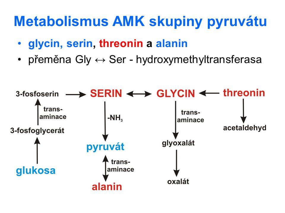 Metabolismus AMK skupiny pyruvátu glycin, serin, threonin a alanin přeměna Gly ↔ Ser - hydroxymethyltransferasa
