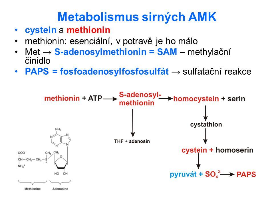 Metabolismus sirných AMK cystein a methionin methionin: esenciální, v potravě je ho málo Met → S-adenosylmethionin = SAM – methylační činidlo PAPS = f