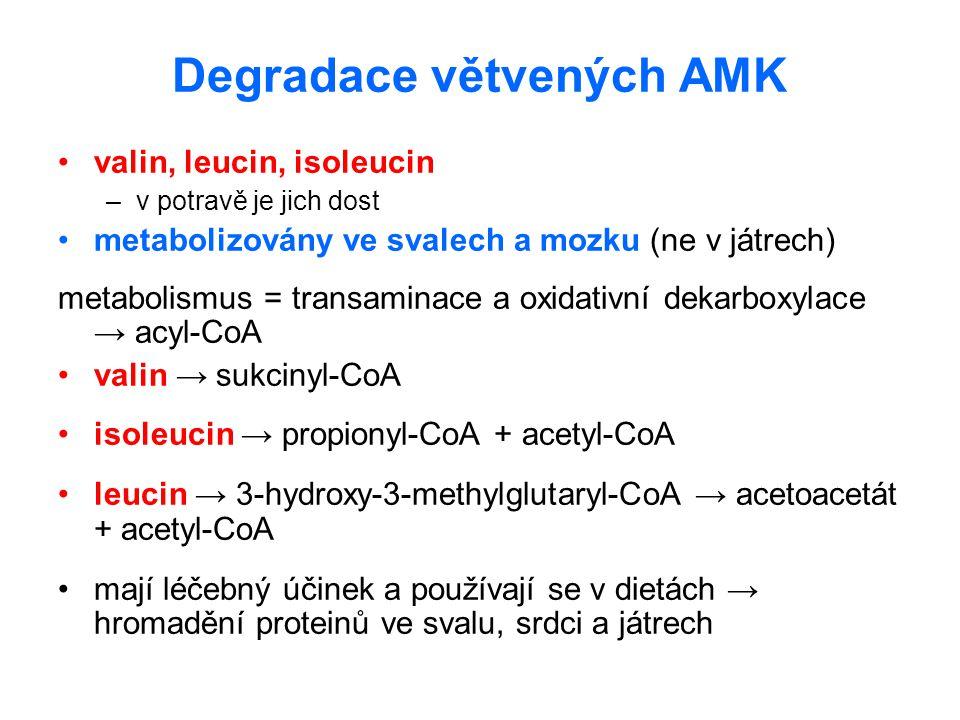 Degradace větvených AMK valin, leucin, isoleucin –v potravě je jich dost metabolizovány ve svalech a mozku (ne v játrech) metabolismus = transaminace