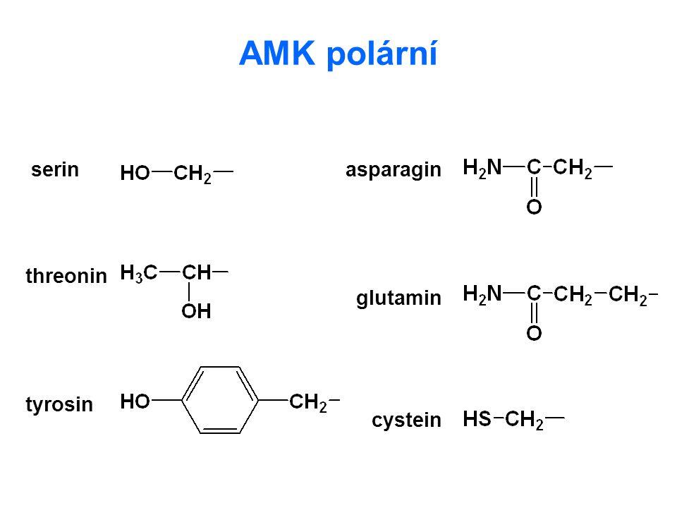 Kyselé a bazické AMK kyselina asparagová kyselina glutamová lysin arginin histidin