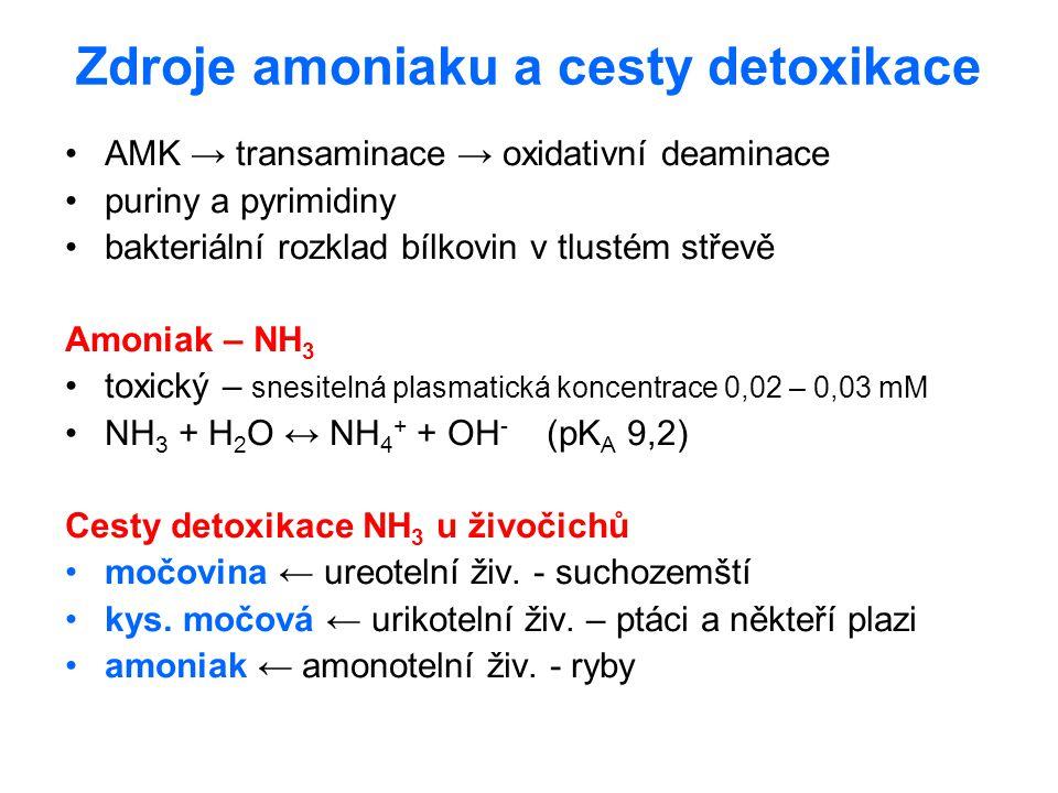 Zdroje amoniaku a cesty detoxikace AMK → transaminace → oxidativní deaminace puriny a pyrimidiny bakteriální rozklad bílkovin v tlustém střevě Amoniak