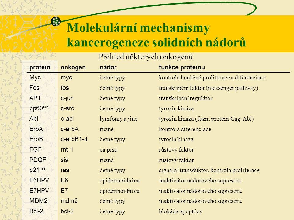 Molekulární mechanismy kancerogeneze solidních nádorů proteinnádorfunkce proteinu p53 četné typy nejčastějších nádorůtranskripční faktor pRb retinoblastom, osteosarkomregulátor transkripce NF-1 neurofibrom, gliální nádoryprotein aktivující GTPázu NF-2 neurinom, meningiomcytoskeletální spoj k membráně APC karcinom tlustého střevasuspektální regulátor β-cateinu WT1 Wilmsův nádortranskripční faktor PTEN četné typy nejčastějších tumorůfosfatáza BRCA1 karcinom mléčné žlázy, ovarií atd.oprava DNA BRCA2 karcinom mléčné žlázyoprava DNA p16 melanoblastom, karcinom pankreatuinhibitor cdk TSC2 tuberózní sklerózaprotein aktivující GTPázu DPC4 karcinom pankreatusignální dráha TGFβ Přehled některých nádorových supresorů