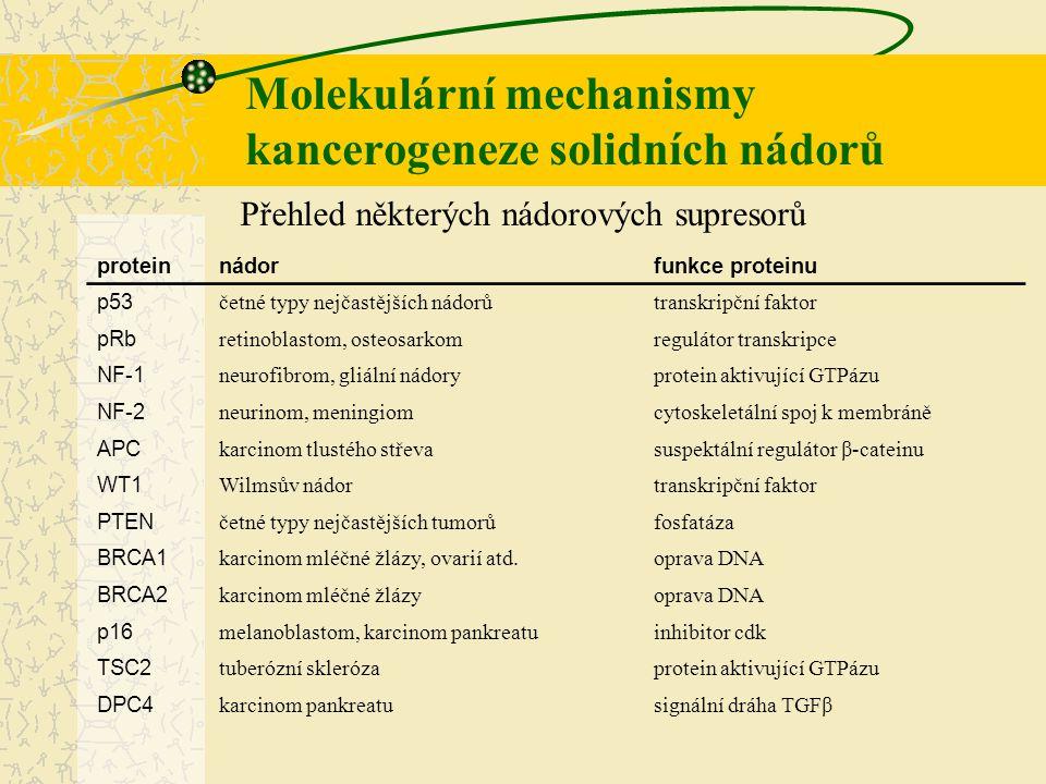 Molekulární mechanismy kancerogeneze solidních nádorů proteinnádorfunkce proteinu p53 četné typy nejčastějších nádorůtranskripční faktor pRb retinobla