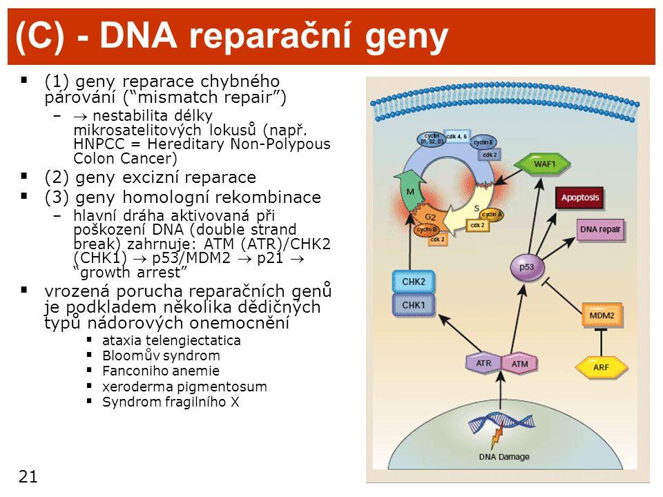 """21 (C) - DNA reparační geny  (1) geny reparace chybného párování (""""mismatch repair"""") – nestabilita délky mikrosatelitových lokusů (např. HNPCC = Her"""