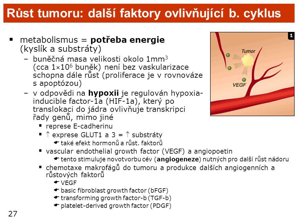 27 Růst tumoru: další faktory ovlivňující b. cyklus  metabolismus = potřeba energie (kyslík a substráty) –buněčná masa velikosti okolo 1mm 3 (cca 11