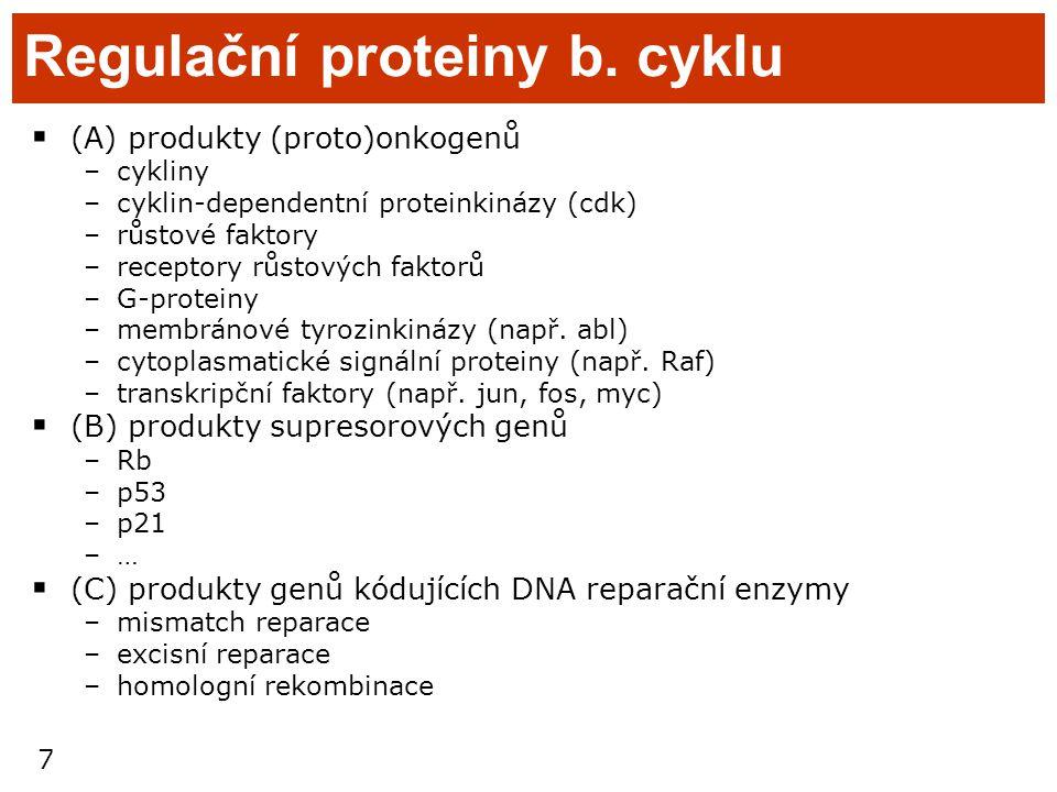 7 Regulační proteiny b. cyklu  (A) produkty (proto)onkogenů –cykliny –cyklin-dependentní proteinkinázy (cdk) –růstové faktory –receptory růstových fa