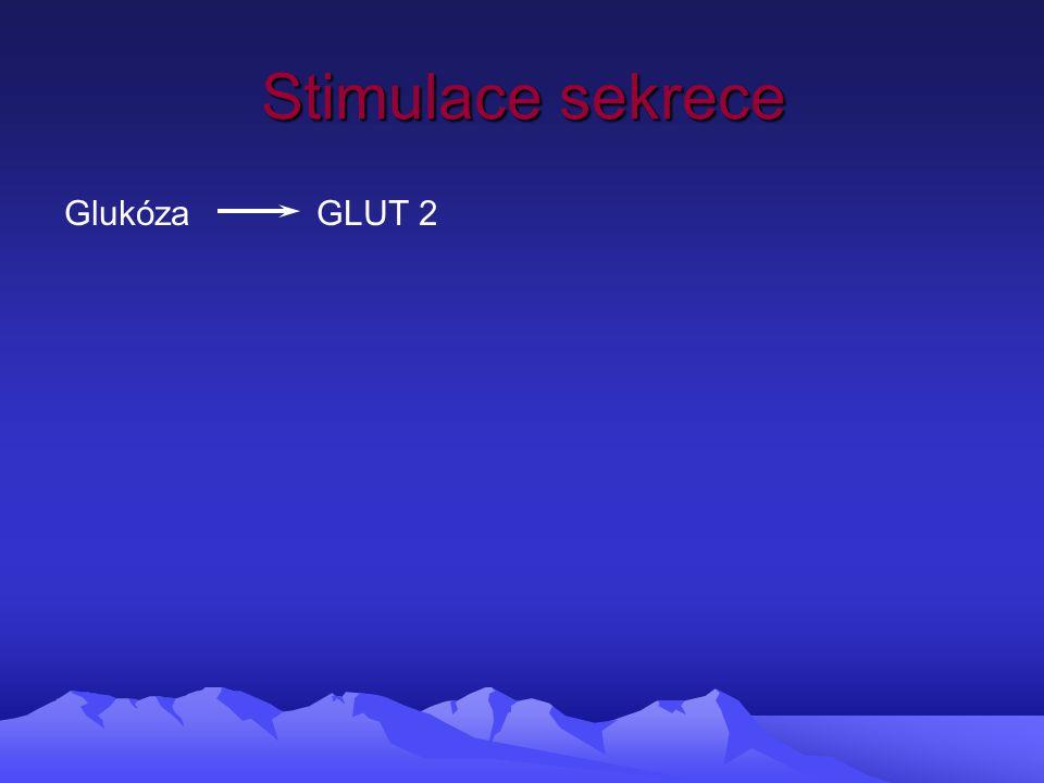 Stimulace sekrece Glukóza GLUT 2