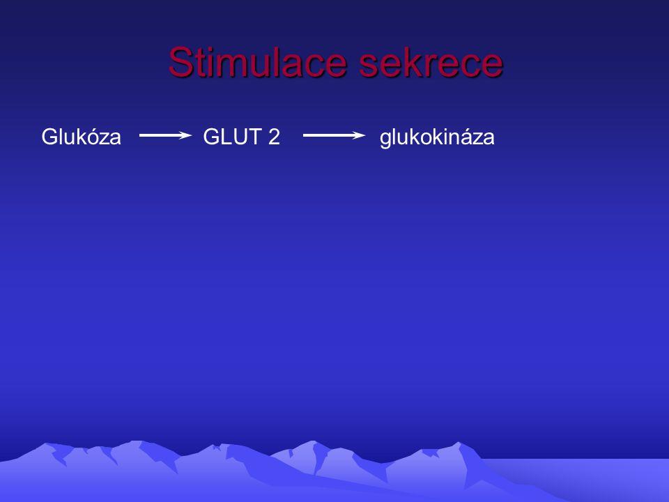 Stimulace sekrece Glukóza GLUT 2 glukokináza