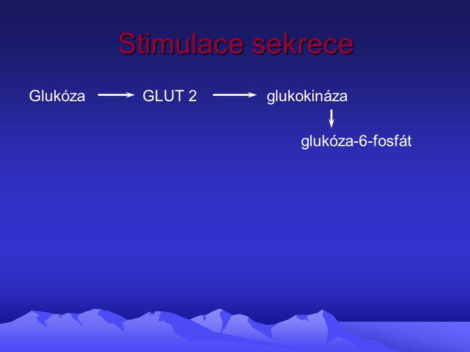 Stimulace sekrece Glukóza GLUT 2 glukokináza glukóza-6-fosfát