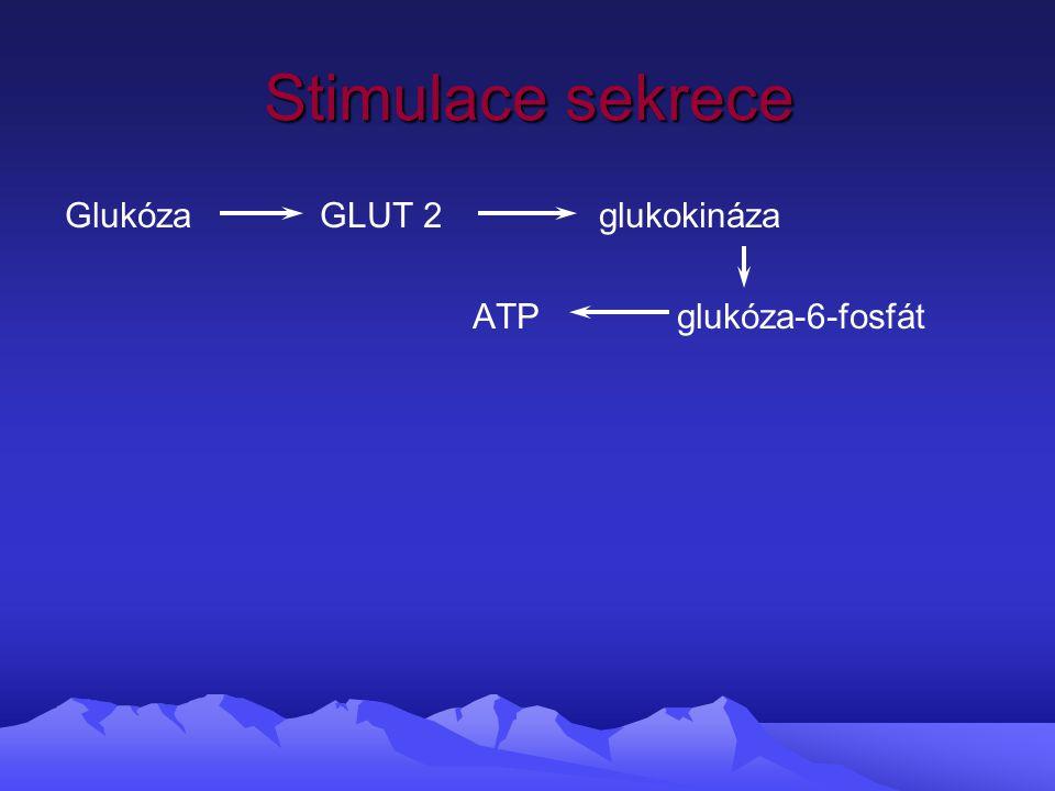 Stimulace sekrece Glukóza GLUT 2 glukokináza ATP glukóza-6-fosfát