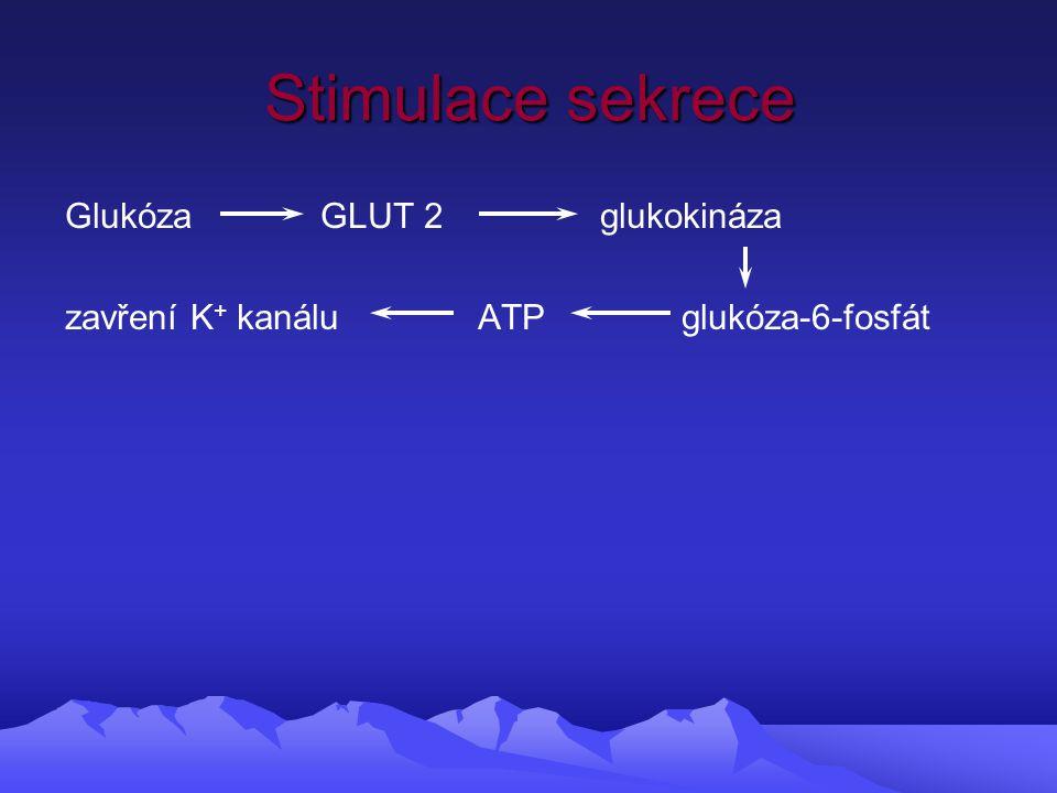 Stimulace sekrece Glukóza GLUT 2 glukokináza zavření K + kanálu ATP glukóza-6-fosfát