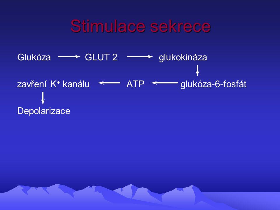 Stimulace sekrece Glukóza GLUT 2 glukokináza zavření K + kanálu ATP glukóza-6-fosfát Depolarizace