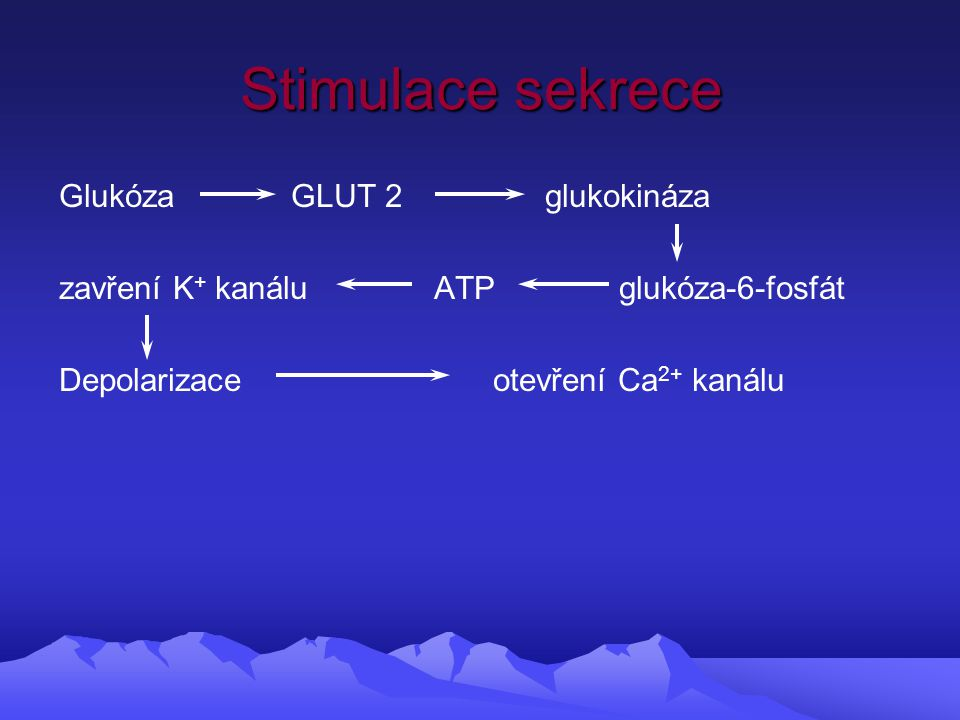 Stimulace sekrece Glukóza GLUT 2 glukokináza zavření K + kanálu ATP glukóza-6-fosfát Depolarizace otevření Ca 2+ kanálu