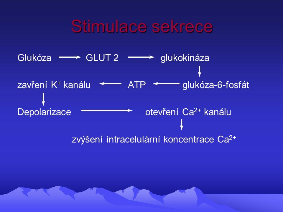 Stimulace sekrece Glukóza GLUT 2 glukokináza zavření K + kanálu ATP glukóza-6-fosfát Depolarizace otevření Ca 2+ kanálu zvýšení intracelulární koncentrace Ca 2+