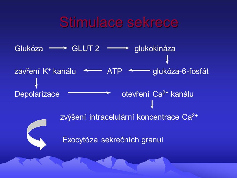 Stimulace sekrece Glukóza GLUT 2 glukokináza zavření K + kanálu ATP glukóza-6-fosfát Depolarizace otevření Ca 2+ kanálu zvýšení intracelulární koncentrace Ca 2+ Exocytóza sekrečních granul