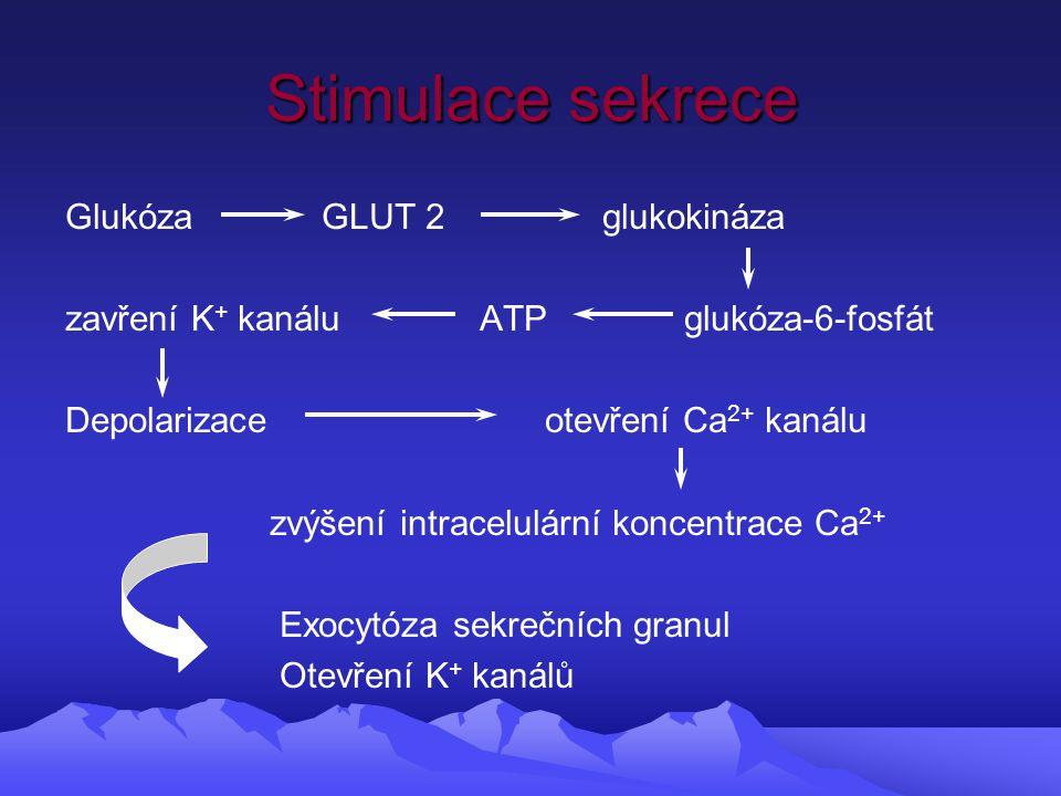 Stimulace sekrece Glukóza GLUT 2 glukokináza zavření K + kanálu ATP glukóza-6-fosfát Depolarizace otevření Ca 2+ kanálu zvýšení intracelulární koncentrace Ca 2+ Exocytóza sekrečních granul Otevření K + kanálů